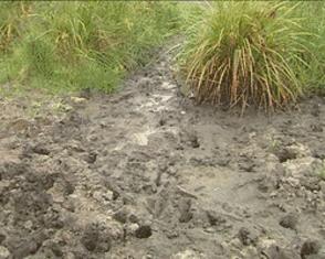 Nyagatare, Est du pays: usage de l'eau des fanges/photo imvaho nshya